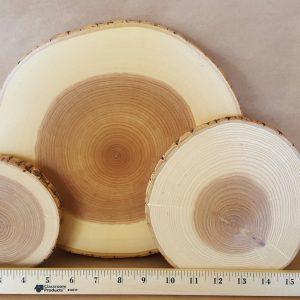 Tree Round - Ash tree