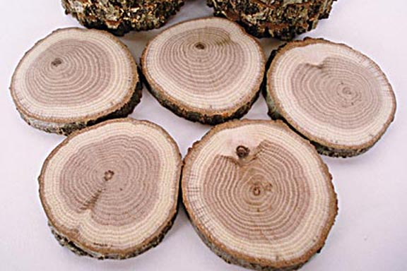 Tree Round - Red Oak, Pack of 5